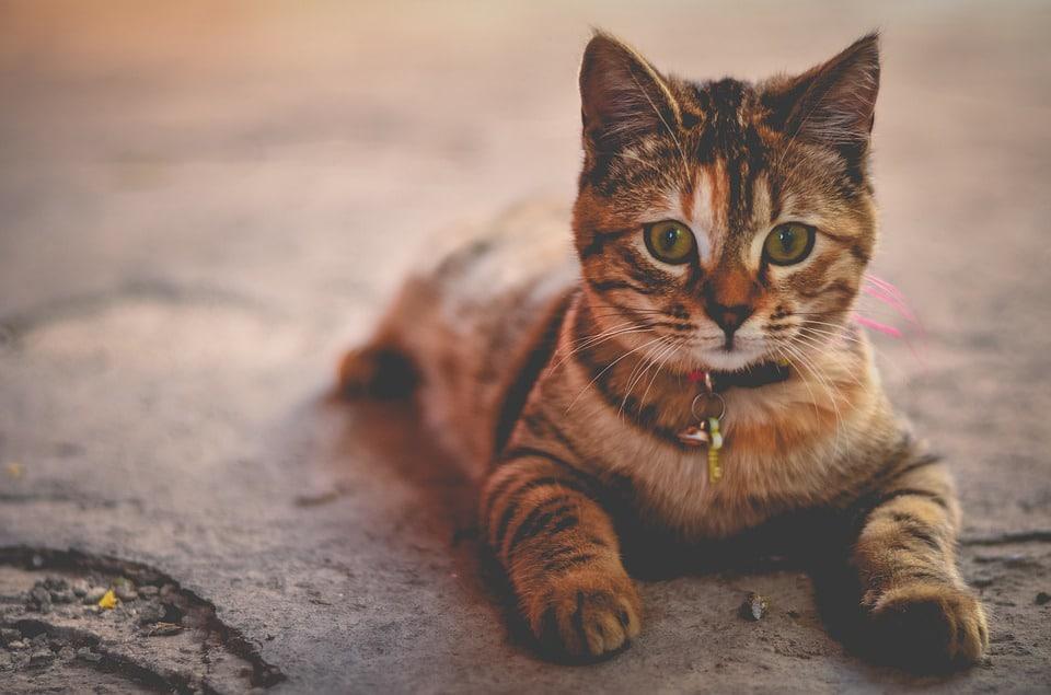 Mieux connaître son chat