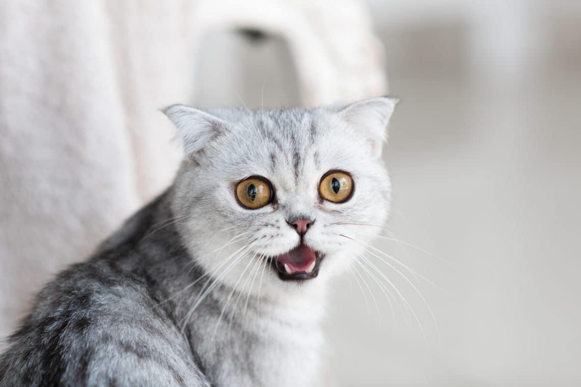 Vidéos chats drôles