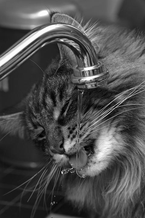 Entretien et nettoyage d'une fontaine à eau pour chat